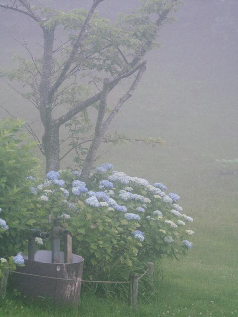 2009年06月29日_PICT0159