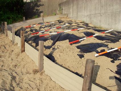 チクゴスズメノヒエ堆肥化2