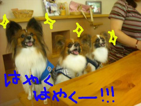 17_20110918210210.jpg