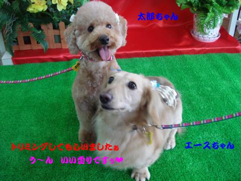 太郎&エース