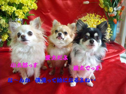 小太郎、楓太、愛太