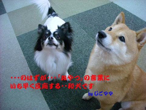 和犬 おやつ