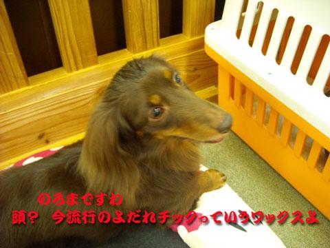 のろま (2)