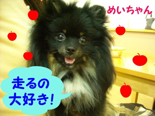 めい2011610