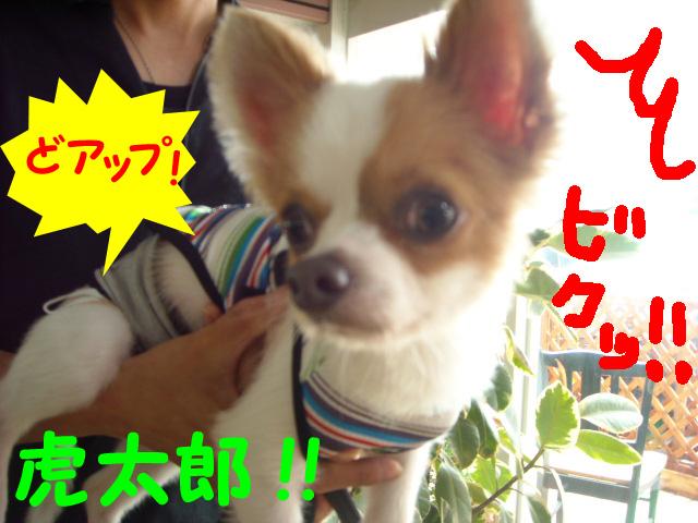 虎太郎2011611