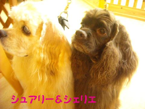 シュアリー&シェリエ