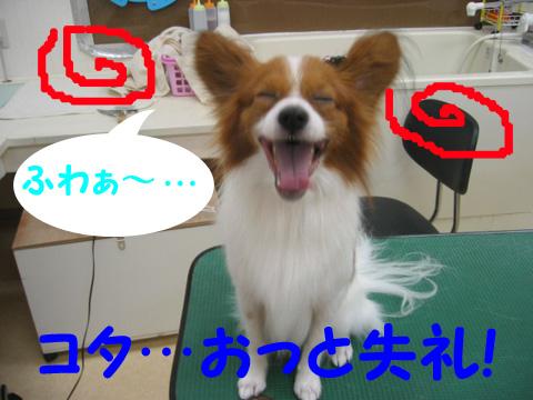 コタロー1