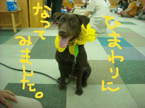 25_20110918210541.jpg