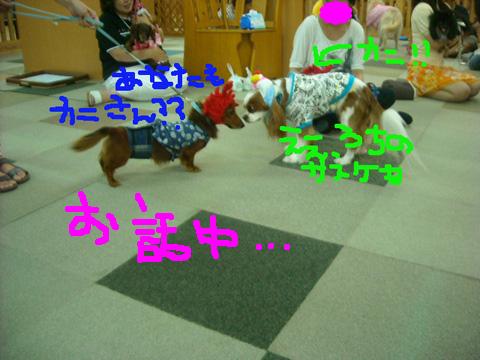 26_20110918210540.jpg