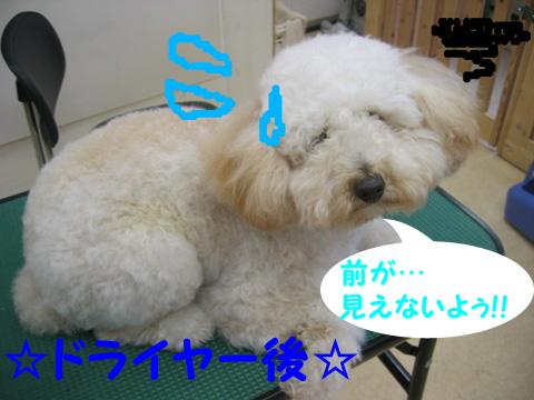 3_20120108180913.jpg