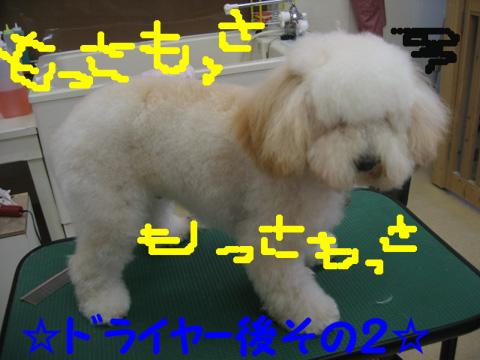 4_20120108180913.jpg