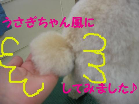 6_20120108180911.jpg
