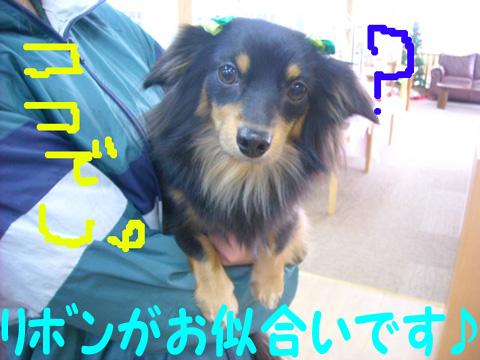 DSCN0420.jpg