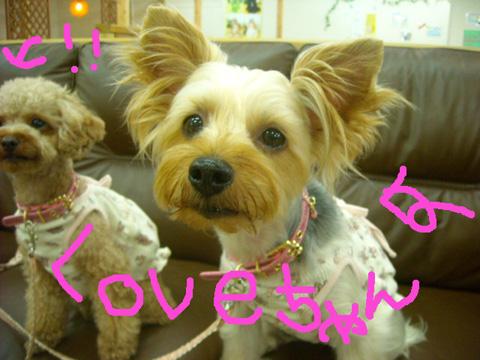 love_20110913180416.jpg