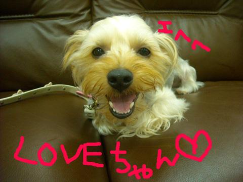 love_20110919192952.jpg