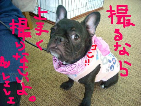 vivi_20110828193031.jpg