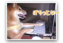 柴犬うに「ブログ更新中」