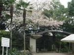 桜がきれいな入り口