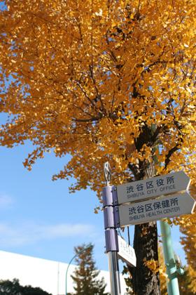 渋谷区役所前の銀杏(いちょう)