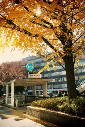 秋の明治神宮前駅