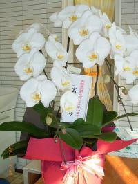 誕生日 お花