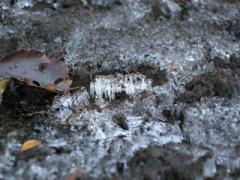 4.霜ばしら