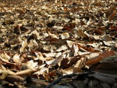 5.枯葉の絨毯