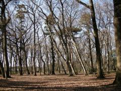 6.雑木林