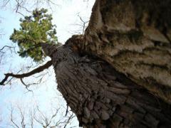 9.仲良しの木