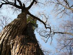 10.仲良しの木