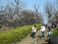 1.羽根木公園