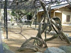 9.藤の木