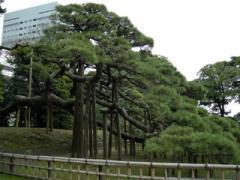 18.三百年の松