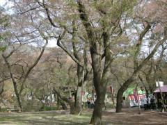 12.桜が・・・