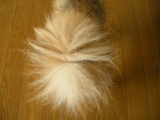 2.ボサ尻尾