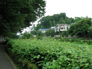 3.野川沿い