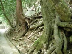 10.木の根