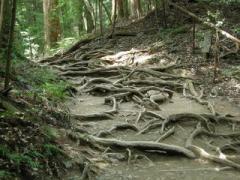 22.木の根道