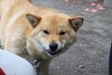 kawakamichibi.jpg