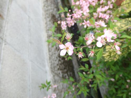 此花はなんでしょう~