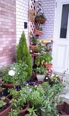 玄関先の植物たち〜