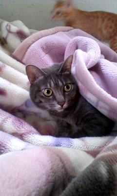 毛布とふうちゃん