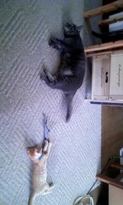 姉ちゃんと昼寝