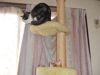 猫タワー順番待ち