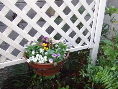 寄せ植え鉢