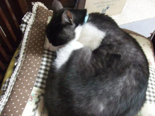 辰さんは 寝てます