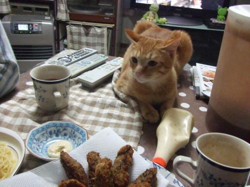 食卓の番猫