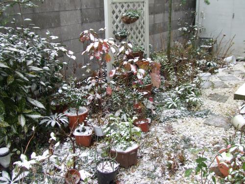 うっすら雪化粧の庭