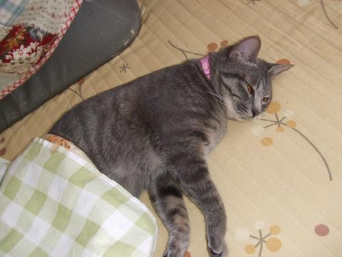 よ~寝てるね(^^)1歳のふうちゃん