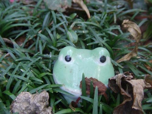 庭のカエルさん~♪